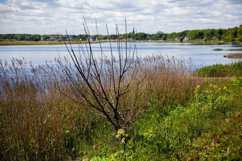河和森林在Majori, Jurmala,拉脱维亚 库存图片