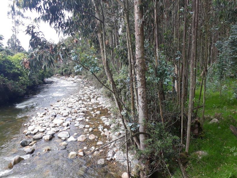 河和森林的银行 免版税库存图片