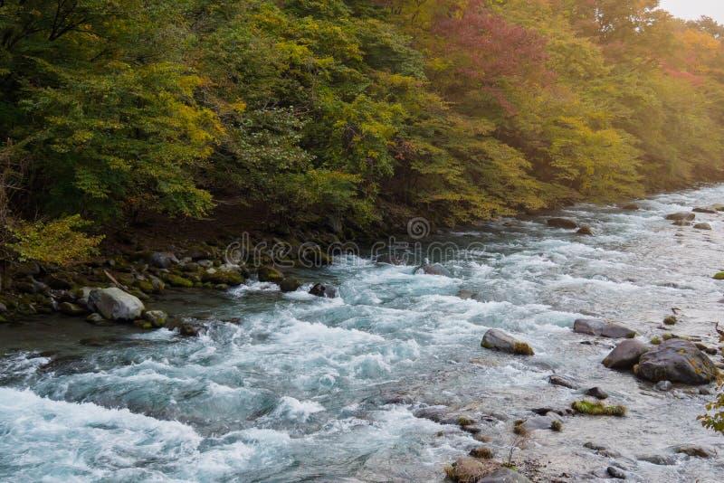 河和石风景与秋天森林 免版税库存图片