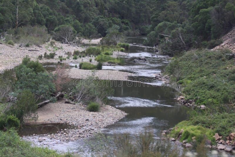河和结构树 免版税图库摄影