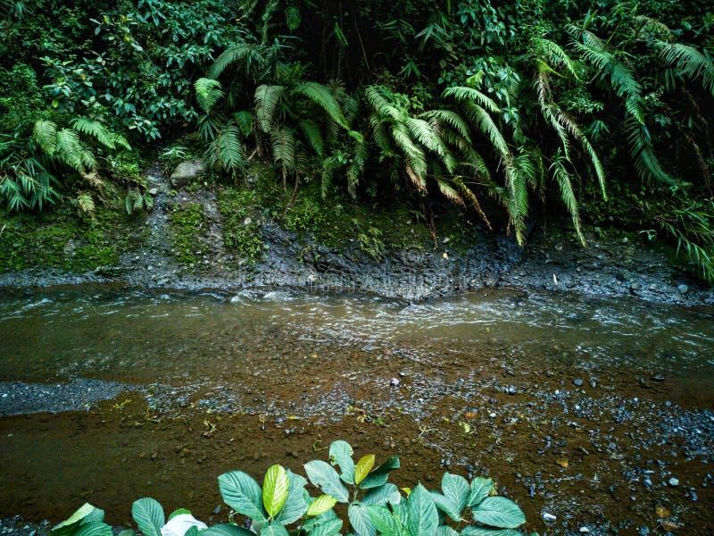河和flora& x27; s 免版税库存图片