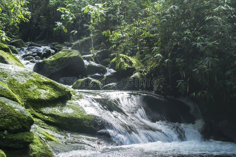 河在大西洋森林的区域在巴西 免版税库存图片