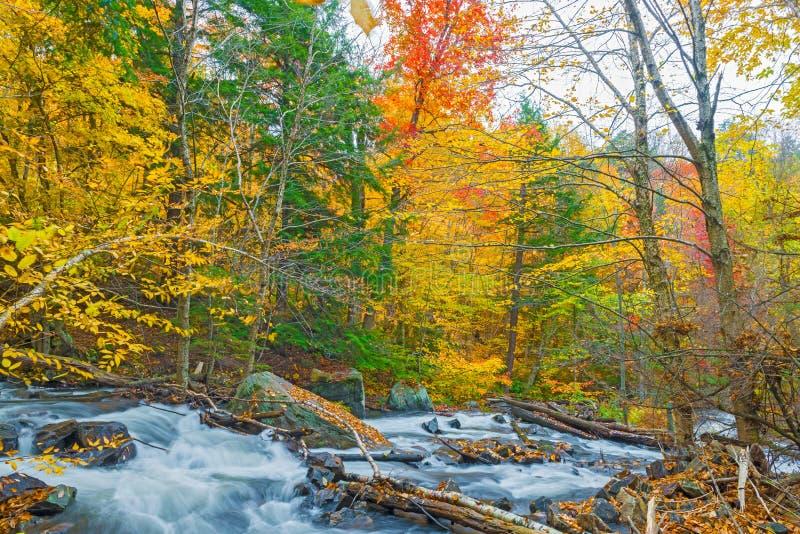 河在安大略的阿尔根金族公园,加拿大 库存照片