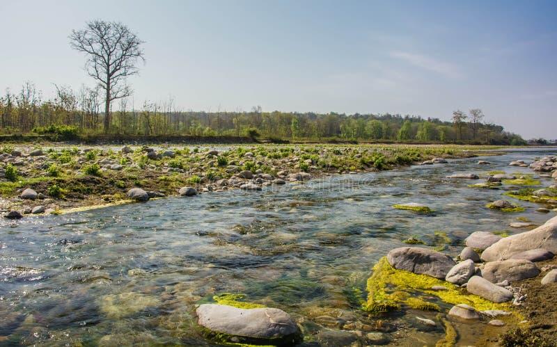 河在早晨在森林里 库存照片