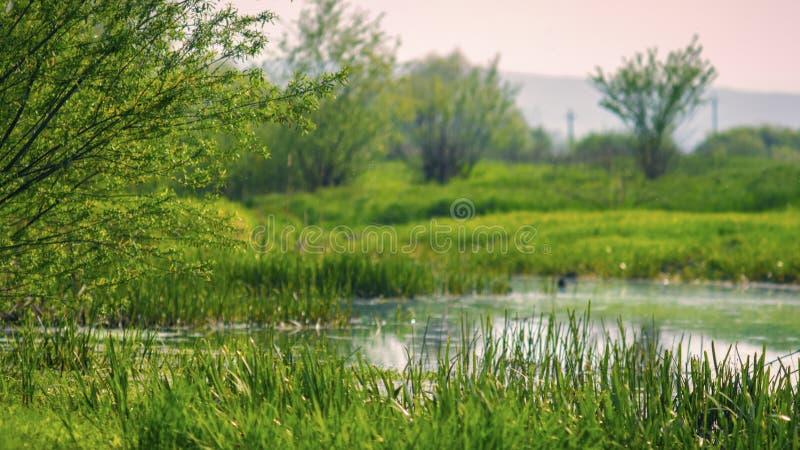 河在早期的春天充斥了草甸 库存图片