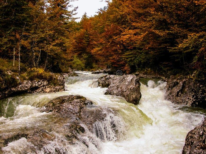 河在有急流的森林里。 秋天。 斯洛文尼亚。 图库摄影