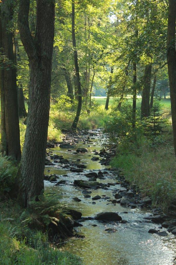 河在有石头的森林里 图库摄影