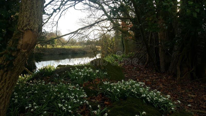 河在森林末端 库存图片