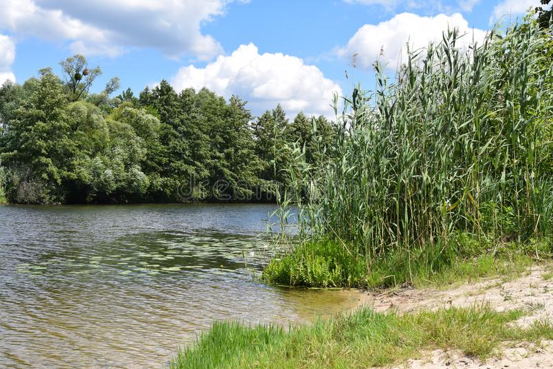 河在森林里在一个晴天 免版税图库摄影
