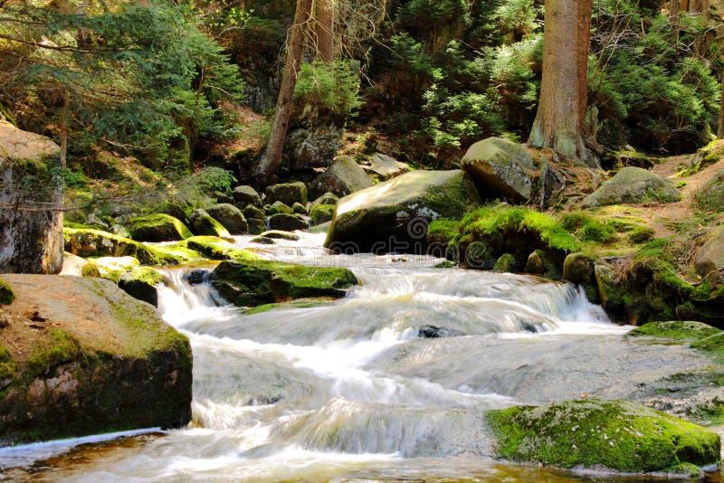 河在森林里 免版税库存图片