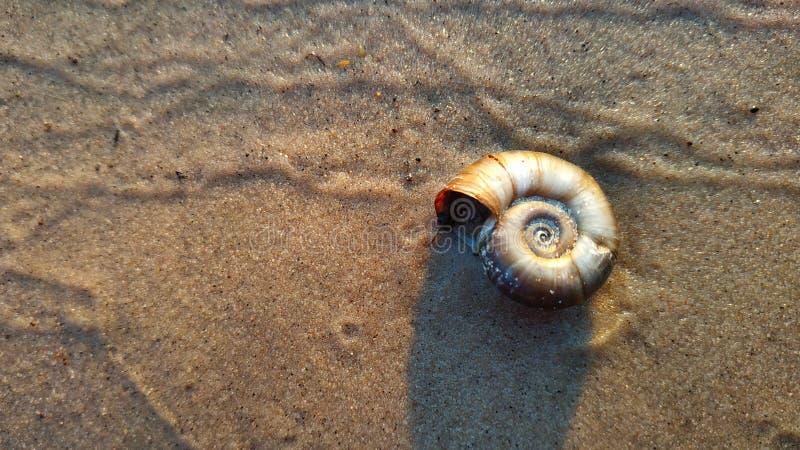 河在湿河沙子背景的蛤蜊壳 免版税库存图片
