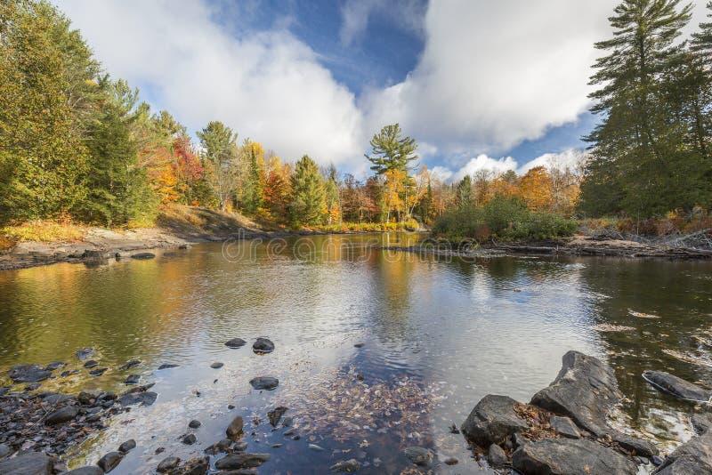 河在秋天-安大略,加拿大的流经一个森林 库存图片