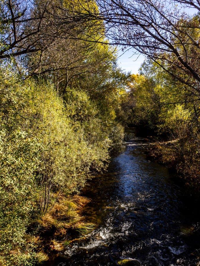 河在马德里附近的森林里 图库摄影
