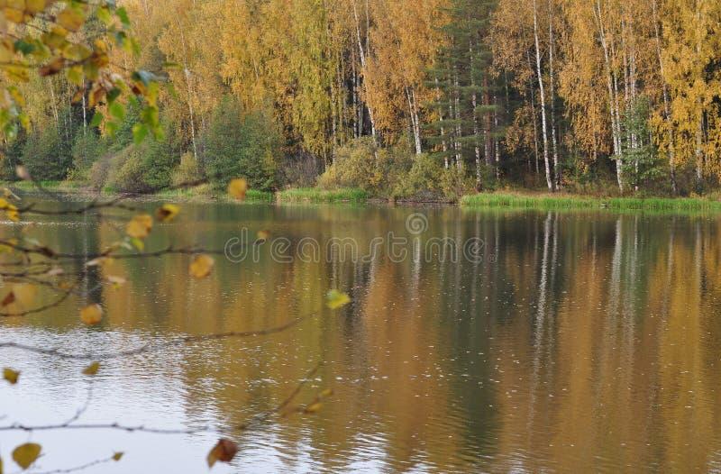 河在10月,秋天 岸的黄色秋天森林在河被反射 免版税库存图片