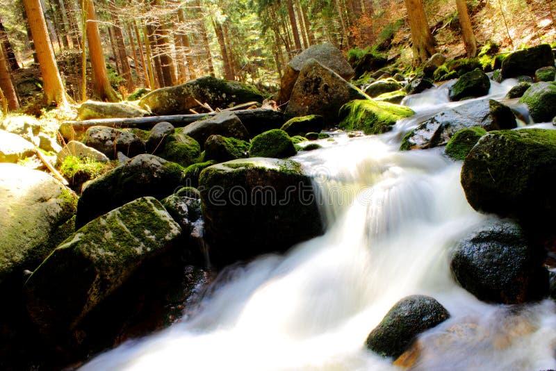 河在beautifull春天森林里 库存照片