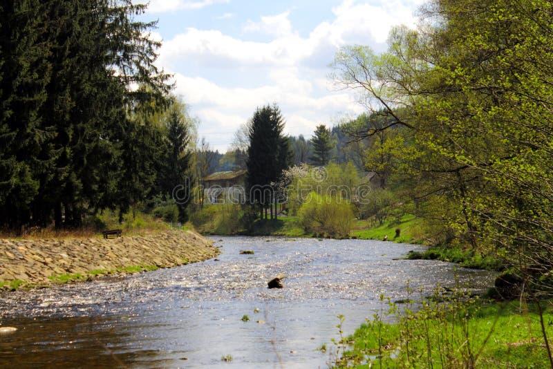河在beautifull春天森林里 免版税图库摄影