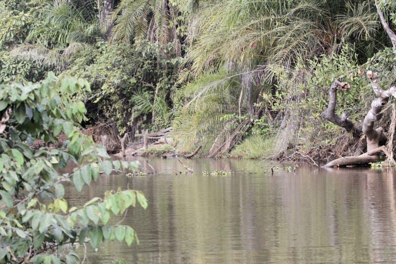 河场面在冈比亚 库存图片