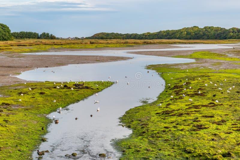 河处于低潮中 库存照片