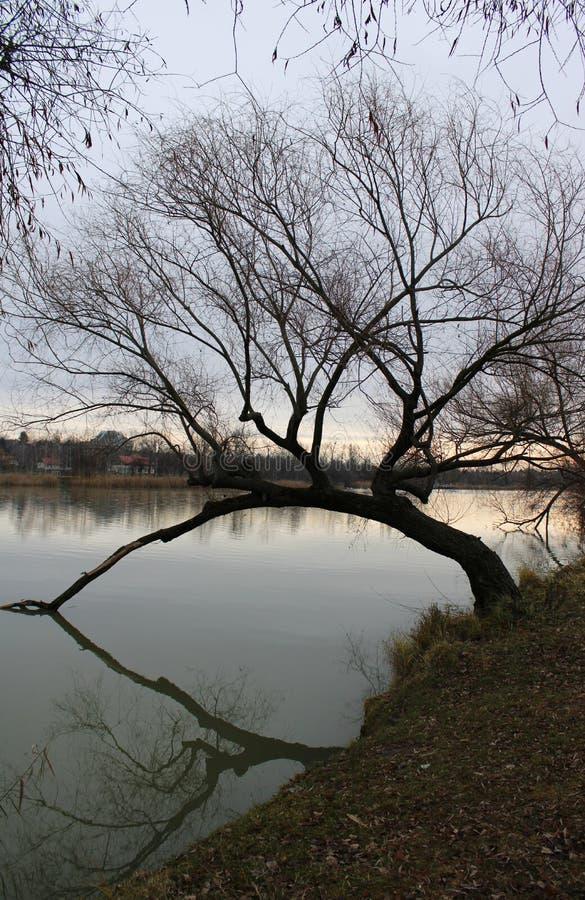 河多瑙河在冬天 免版税图库摄影