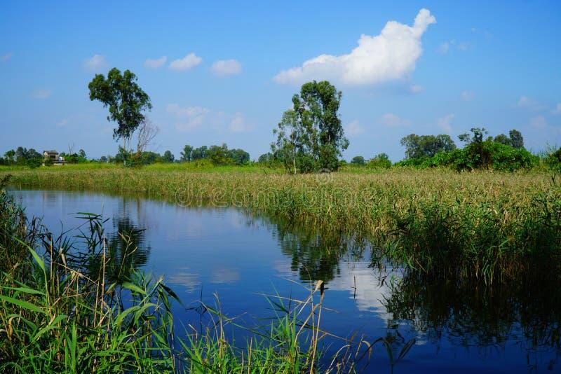 河岸和沼泽地风景看法  库存图片