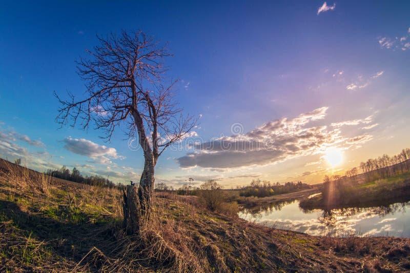 河岸的美好的春天风景日落的与在天际的太阳 免版税库存图片