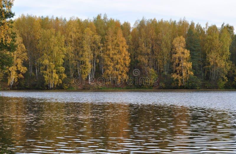 河岸的黄色秋天森林 库存照片