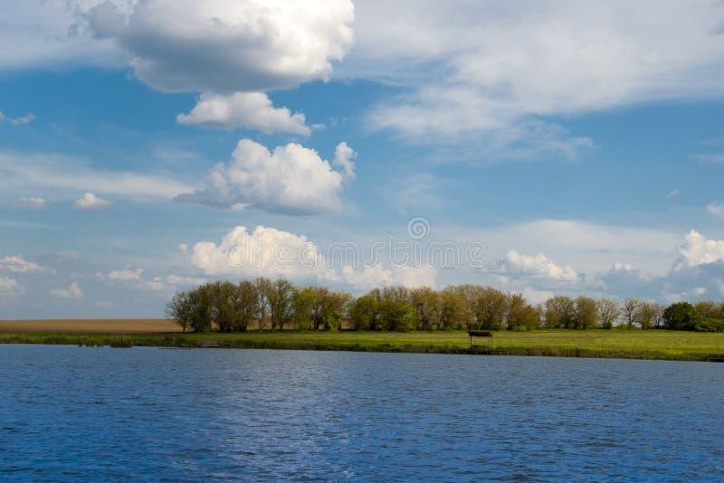 河岸的年轻森林 免版税库存照片