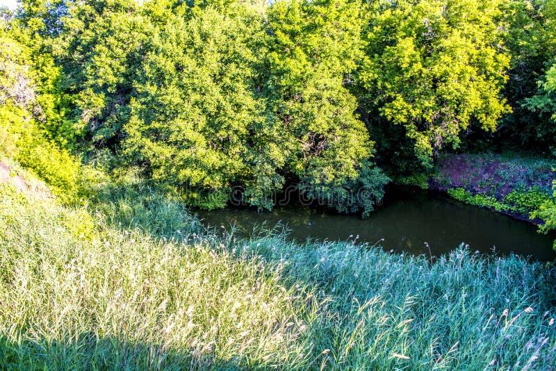 河峡谷在森林里在黎明 免版税库存图片
