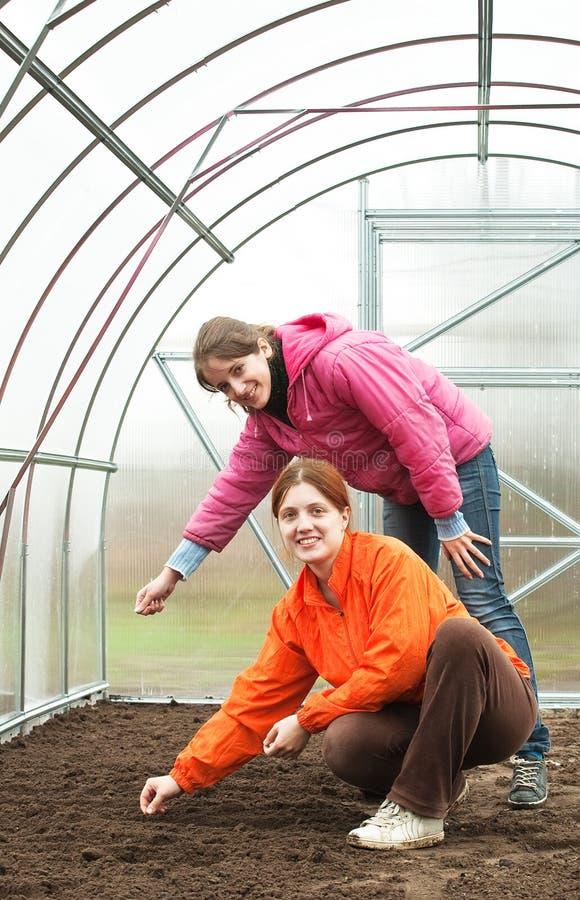 河床温室播种妇女 免版税库存图片