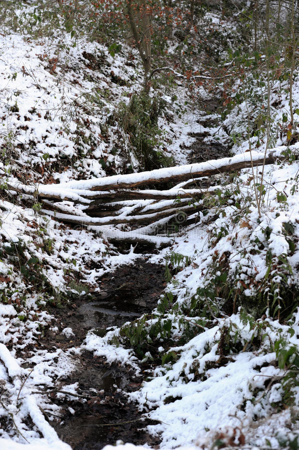 河床雪流 库存照片