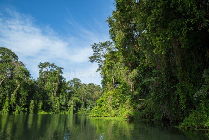 河旅行在密林 图库摄影