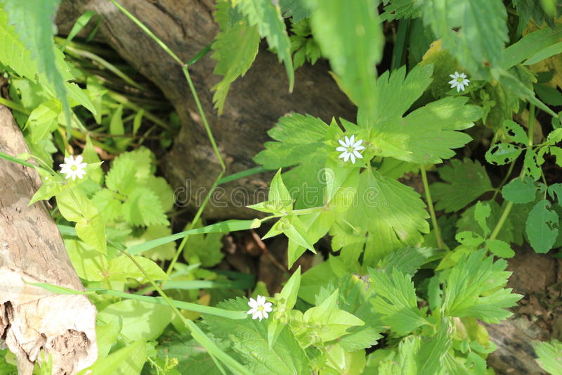 河植物 图库摄影