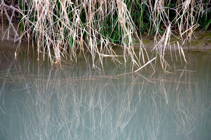 河水背景  免版税库存照片