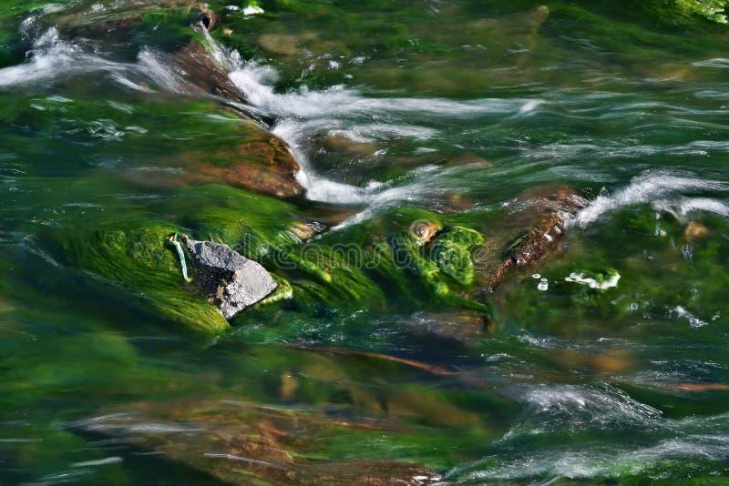 河洪流水 免版税图库摄影