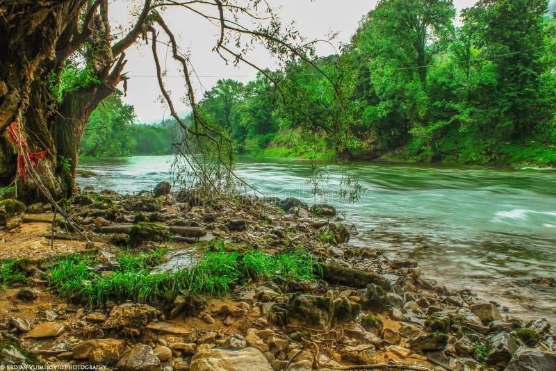 Download 河流程在森林里 库存图片. 图片 包括有 公园, 小河, 干净, 城市, 横向, 茶点, 速度, 工厂, beauvoir - 62536933