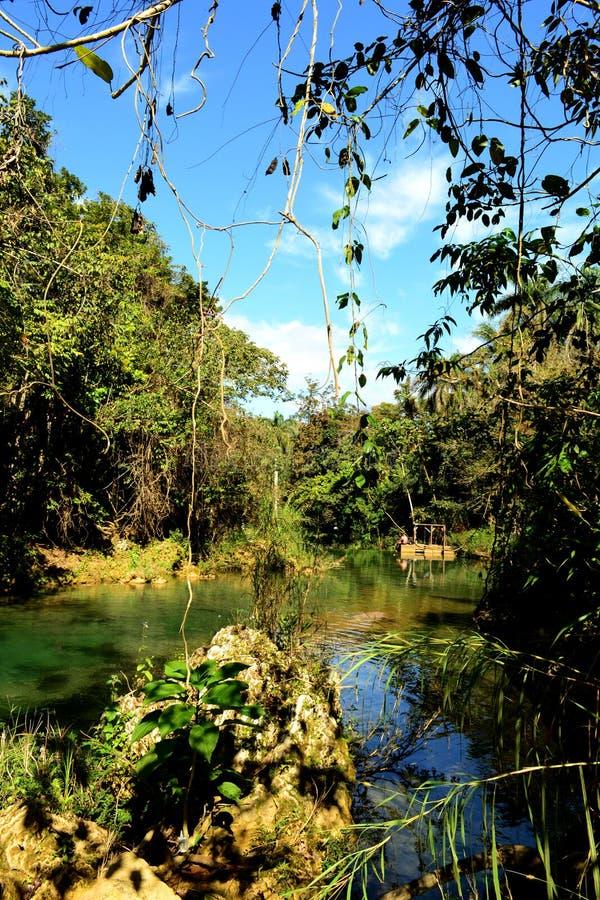 河的看法在绿色雨林El Nicho (里;Cienfuegos);古巴 免版税库存图片