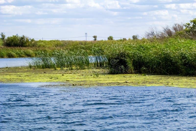 河的看法有植被的反对天空蔚蓝和云彩 免版税库存照片