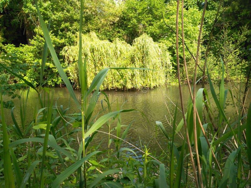 河的秀丽在夏天太阳下的 库存图片
