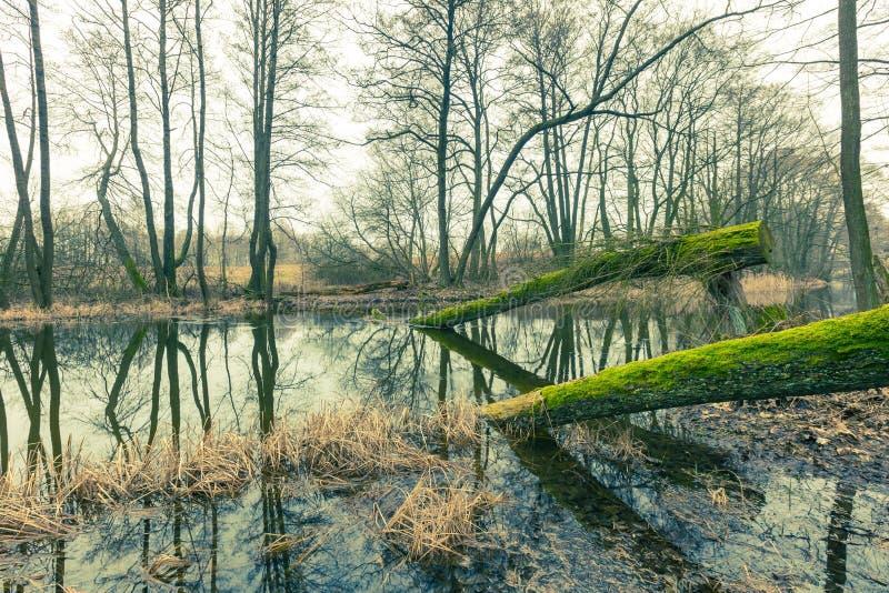 河的葡萄酒图片在春天森林里 免版税库存图片