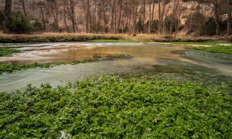 河绿色植物 免版税库存照片