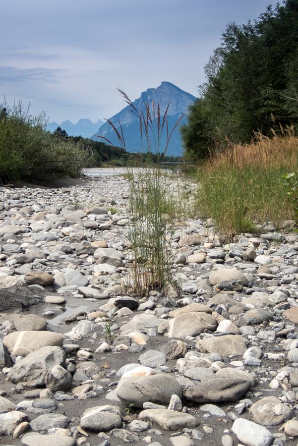 河莱茵河的河岸有后边岩石的和漂流木头和黄色沼泽草和山 库存图片