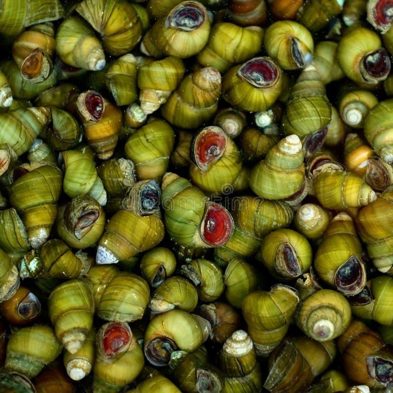 河蜗牛 免版税库存图片