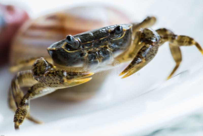 河螃蟹 库存图片