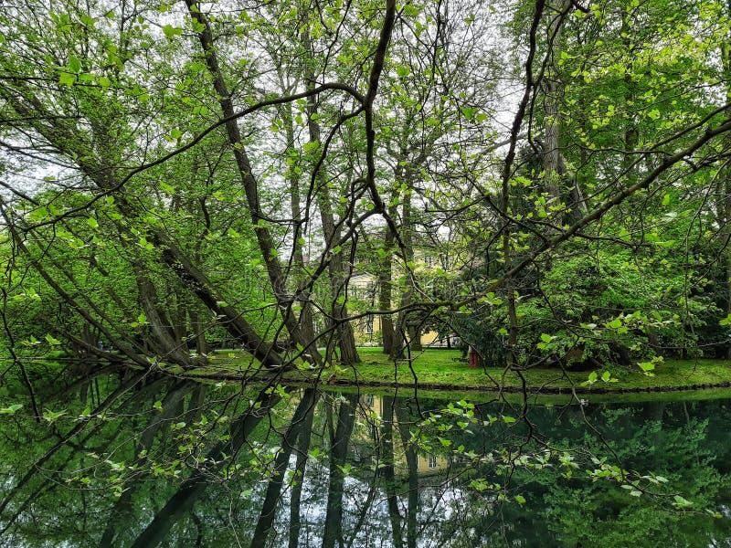 河边树林多的美丽公园 库存图片