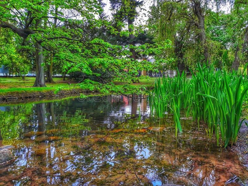 河边绿树公园 库存照片