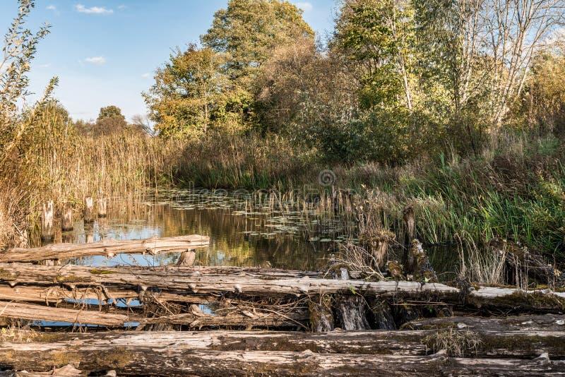 河长满与植被,古老被毁坏的桥梁 免版税库存照片