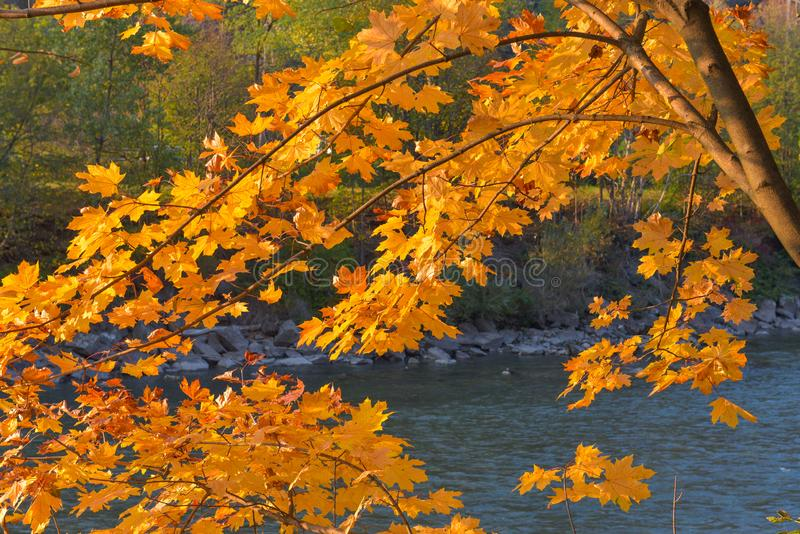 河风景在秋天,与橙色山毛榉叶子 免版税库存照片