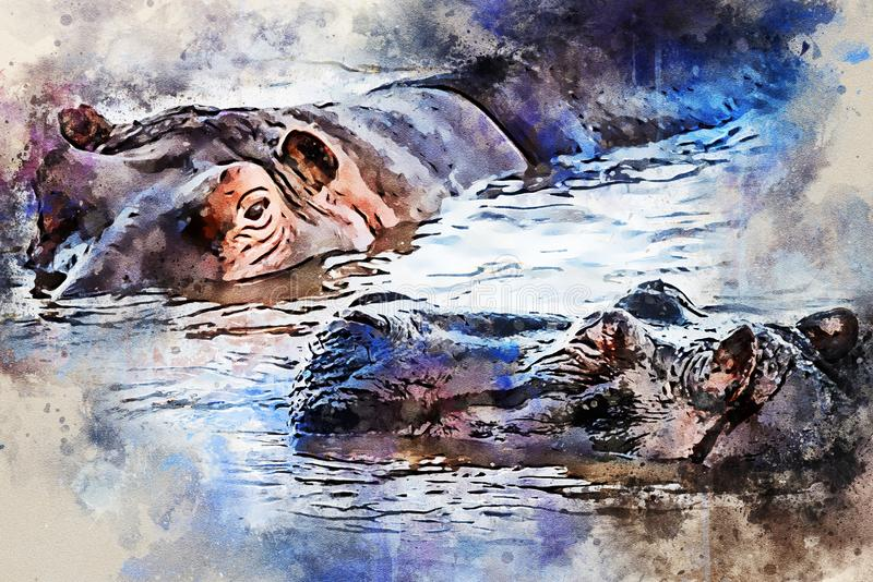 河马或河马amphibius水彩绘画在水中 向量例证