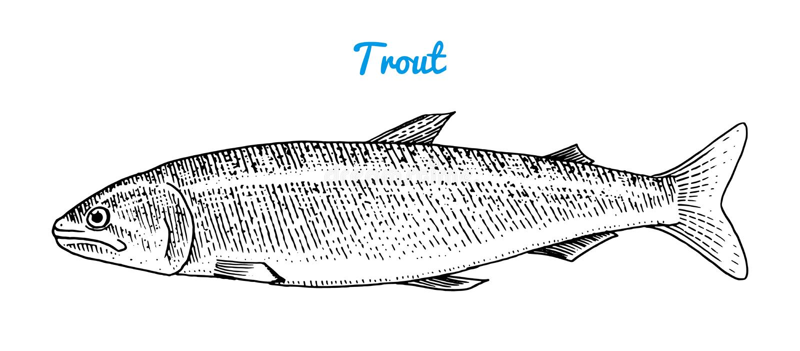河鳟鱼和湖鱼 海生物 淡水水族馆 菜单的海鲜 刻记手拉在老葡萄酒 库存例证