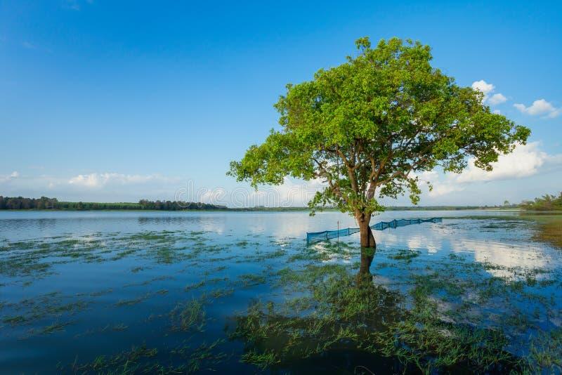 河,云彩-天空,洪水,森林 免版税库存图片